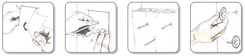 Шипы самоклеящиеся длиной 32мм (уп. 100 шт.)